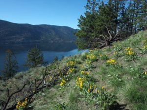 Envisioning a resilient Okanagan